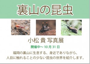 裏山の昆虫