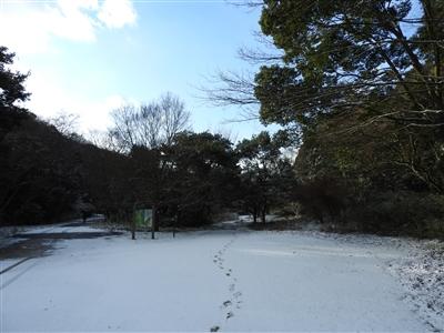 DSCN9778mini - 1月12日(金)本日開園しています!(雪情報)