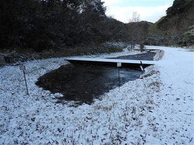 DSCN9785mini - 1月12日(金)本日開園しています!(雪情報)