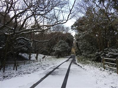 DSCN9788mini - 1月12日(金)本日開園しています!(雪情報)